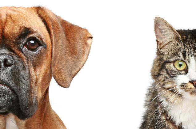 Por que tantos veterinários recomendam apenas o uso de ração? 3