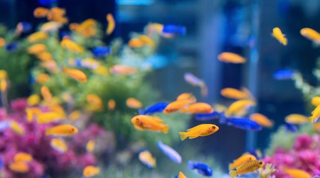 Aquecedor de aquário com ou sem termostato? Eis a questão! 4