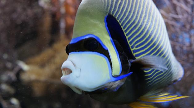Alimentos para peixes de aquário 2