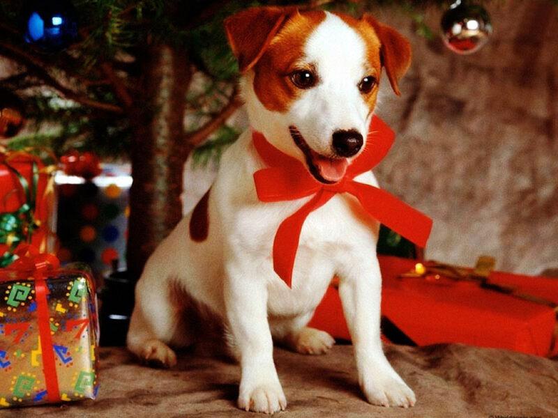 Reduza o estresse do seu cão nas festas de final de ano 1