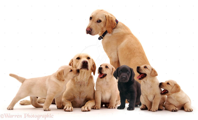 Cães em apartamentos: 6 dicas para conviver em harmonia 1