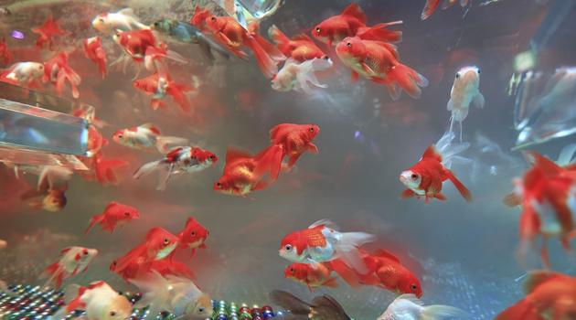 desligar sistema - Alimentos para peixes filhotes