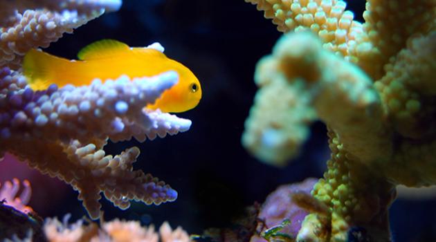 Troca parcial de água nos aquários 1