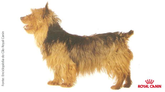 Austrália: Terrier Australiano